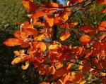Herbst im Sauerland